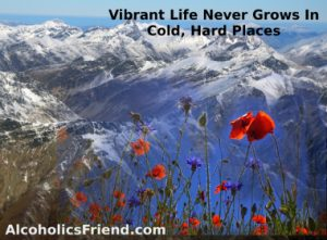 vibrant-life-growing-in-cold-hard-places